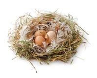 Ägg i det isolerade redet Royaltyfri Foto