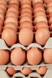 Ägg i en ask Arkivbild