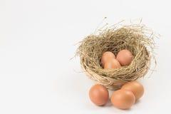Ägg i en bygga bo royaltyfri foto