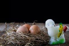 Ägg i en bygga bo Royaltyfria Foton