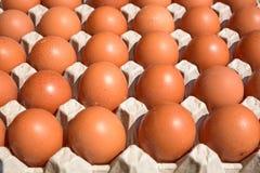 Ägg i en låda på en lokal marknad i Europa Fotografering för Bildbyråer