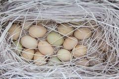 Ägg i en pappers- ask Royaltyfria Foton