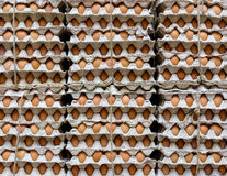 Ägg i en shoppa Arkivfoton