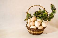 Ägg i en vide- korg Arkivfoton