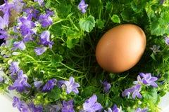Ägg i ett rede av blåklockablommor med gräsplansidor som en easter Arkivbild
