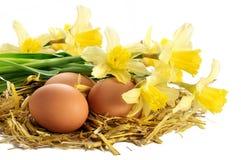 Ägg i ett rede av sugrör och påskliljor som isoleras på vit backgr arkivfoton