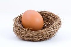 Ägg i ett rede som isoleras på vit bakgrund Royaltyfri Bild