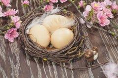 Ägg i ett vårblomningrede Royaltyfri Fotografi