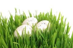 Ägg i gräs Royaltyfria Foton