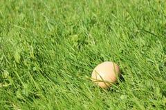Ägg i gräs Arkivbilder