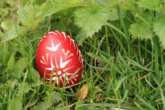 Ägg i gräs Arkivfoto