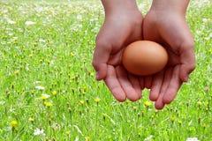 Ägg i händer på änggräsplanbakgrund arkivbilder