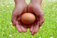 Ägg i händer på änggräsplanbakgrund royaltyfri bild