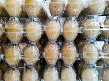 Ägg i klart plast- magasin royaltyfria foton