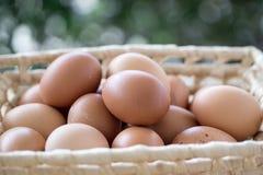 Ägg i korgen Royaltyfria Bilder
