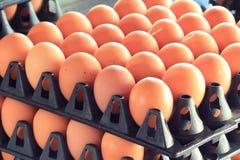 Ägg i lådamagasin Arkivbild