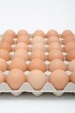 Ägg i magasin Arkivfoto