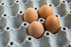 Ägg i packen Arkivfoto