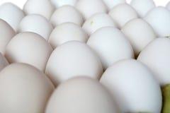 Ägg i packen Royaltyfri Fotografi
