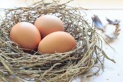 Ägg i rede Arkivfoto