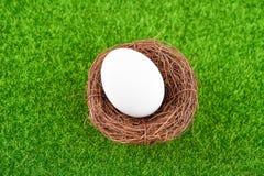 Ägg i rede för fågel` s Royaltyfri Bild