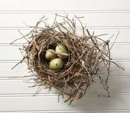 Ägg i rede på trä Arkivfoto