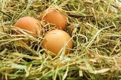 Ägg i redet Arkivfoton