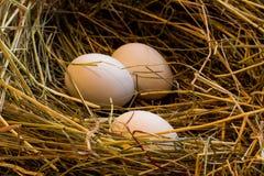 Ägg i redet Royaltyfri Fotografi