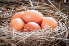 Ägg i sugrör/nya ägg för bonde` s Arkivbild