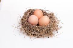 ägg isolerade white Fotografering för Bildbyråer