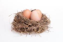 ägg isolerade white Arkivbild