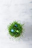 Ägg med blommor på en vit bakgrund easter symboler Royaltyfri Foto