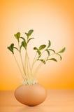 Ägg med den gröna plantan Arkivbilder