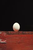 Ägg nya fega ägg Begrepp Royaltyfri Fotografi