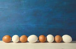 Ägg Nya fega ägg som är klara för att laga mat Arkivbild