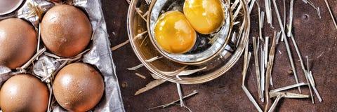 Ägg och ett skal Arkivfoton