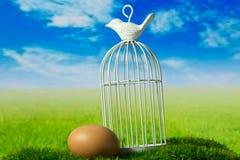 Ägg och fågelbur på den gröna fantasiängen Arkivbild