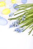 Ägg- och för blåttvårblommor muscari Fotografering för Bildbyråer