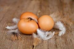 Ägg och fjädrar Royaltyfri Foto