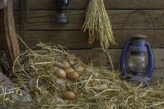 Ägg och fjädrar i sugrörredet är i spannmålsmagasinet av en lantgård Royaltyfri Bild