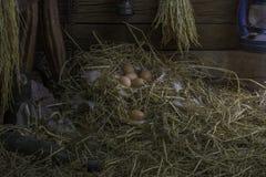 Ägg och fjädrar i sugrörredet är i spannmålsmagasinet av ett lantbrukarhem, en ladugård eller ett garage Lampa på träväggen och e Royaltyfri Bild