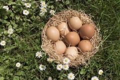 Ägg och gräsmatta Fotografering för Bildbyråer