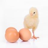Ägg och höna Arkivfoto
