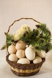 Ägg och höna i en vide- korg Royaltyfri Foto