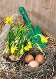 Ägg och påskliljor Royaltyfria Foton