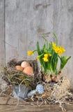 Ägg och pingstlilja Arkivbild