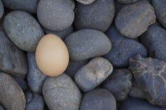 Ägg på den svarta stenen Arkivfoton