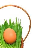 Ägg på det gröna gräset i korgen Royaltyfri Foto