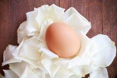 Ägg på det vita kronbladet Arkivbilder