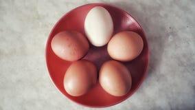 Ägg på en bästa sikt för platta arkivbilder